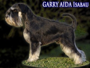 BMCS-GARRY-Aida-Isabau