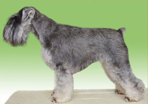 BMKS-ANETKA-Danky-dog