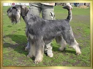 BVKS-Zeridanu-dog-love-enzo-ferrari