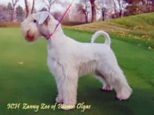 A-BMB-Zanny-Zoe-of-Bianco-Olgas
