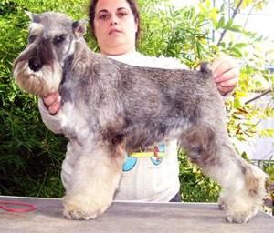 BMKS-Dog-Othos-SAHARA-GIRL