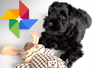 fotogalerie KCHPB na Google Photos